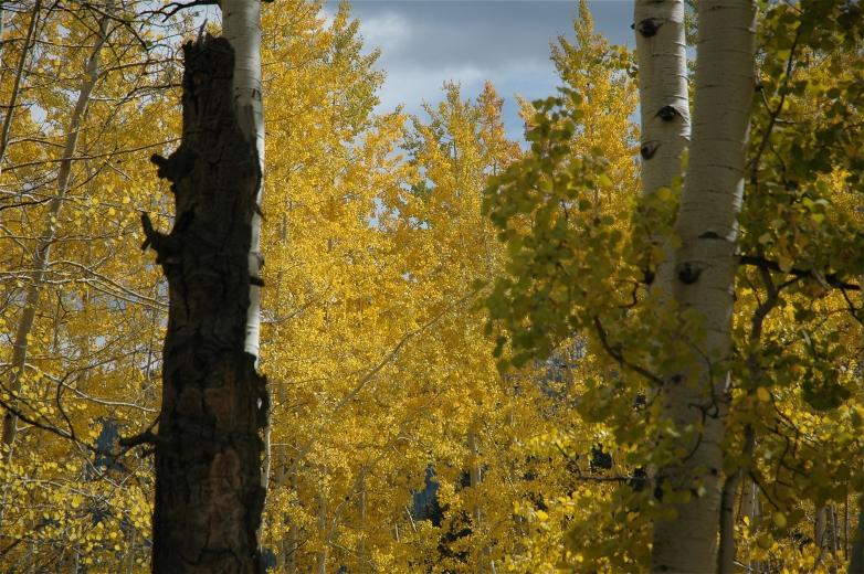 2006-10-6_Colorado_Fall_Trip_Aspen_080.jpg