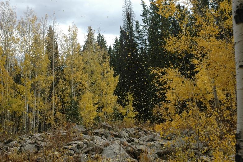 2006-10-6_Colorado_Fall_Trip_Aspen_163.jpg